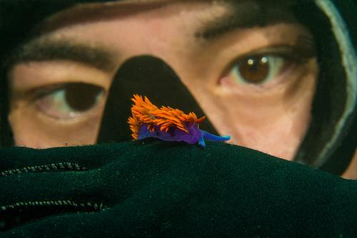 Spanish Shawl Nudibranch Dazzles Underwater