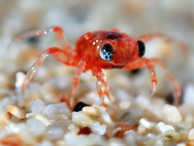 christmas-island-baby-crab