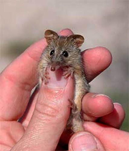 If You Give a Honey Possum Some Nectar…