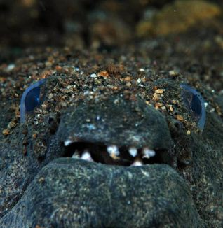 Creature From the Deep: Spotted Spoon-Nose Eel