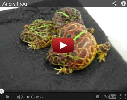 This Angry Frog Sounds Like 'Abu' From Aladdin
