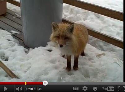 Only In Alaska…