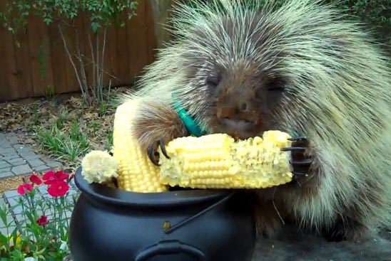 Teddy the Porcupine & His Pot Full of Gold