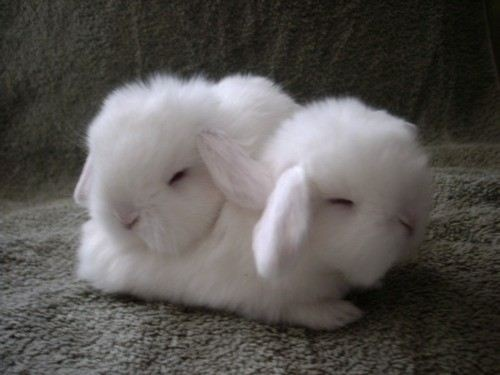 Cotton Ball Bunnies Come to Life