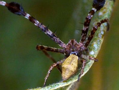 The Spider That Can Act and Sports a Beard. Boo ya.