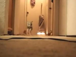 Vaccuums: A Kitten's Worst Nightmare