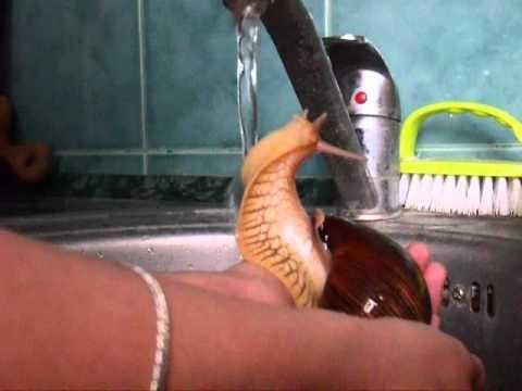 Snail Takes a Shower