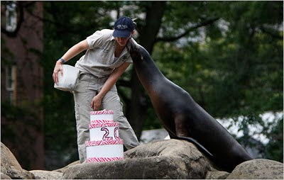 seal birthday