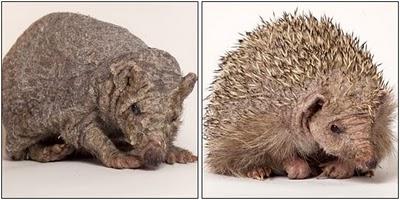 spineless hedgehogs