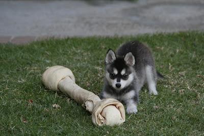 8 MORE Really Weird Dog Breeds