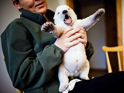 Siku, the Danish Polar Bear Cub That Will Melt Your Heart