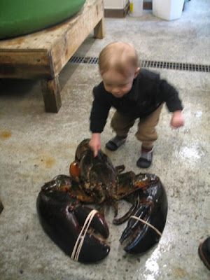 27 lb Monster Lobster CAUGHT!
