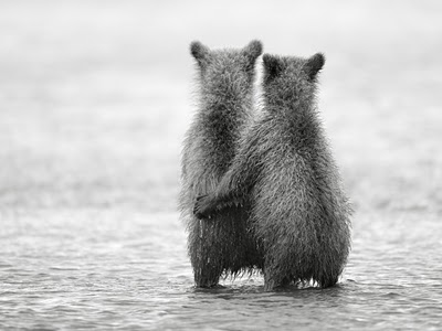 cute bear cubs hugging