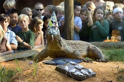 komodo dragon birthday