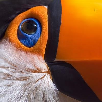 macro toucan