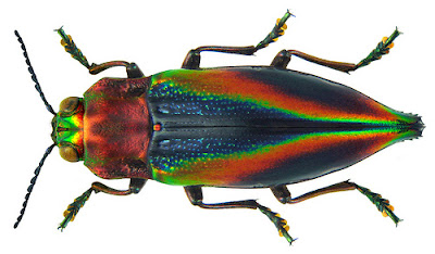 Magic Must Exist When Beetles Look Like This