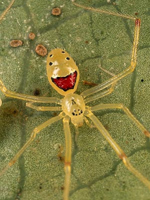 Oh Stop It Happy Face Spider You Re Making Me Blush