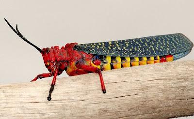 The Devilishly Detailed Milkweed Locust