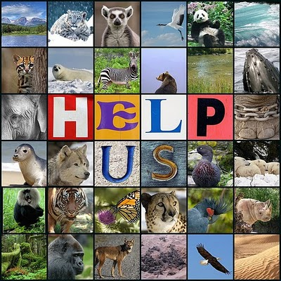 help endangered animals