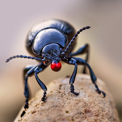 Someone Give This Guy a Tissue: the Bloody-nosed Beetle