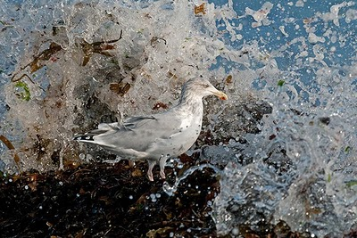 sea gull near water, amazing