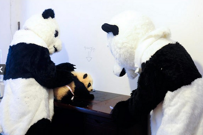 man dressed as panda helps panda cub