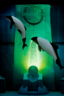 commerson's dolphin, Cephalorhynchus commersonii
