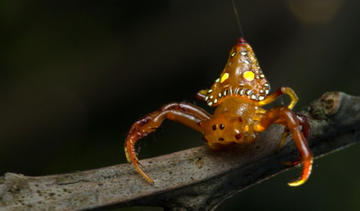 Learn Your Shapes With the Triangluar Spider