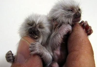 Tiny Animals On Fingers