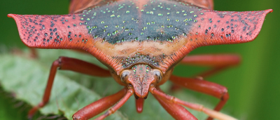 8 Outrageously Weird Insects