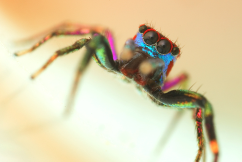 The Trippy Rainbow Spider of Psychadelica Land | Featured ...