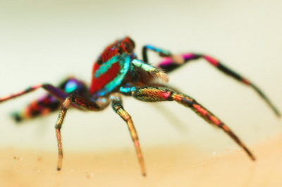 The Trippy Rainbow Spider of Psychadelica Land
