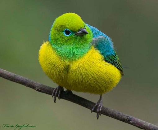Mr. Fluffy Feathers: a Very Cute Bird