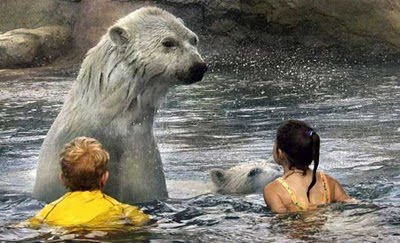 children swim with polar bears