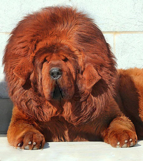 The most expensive dog in the world featured creature