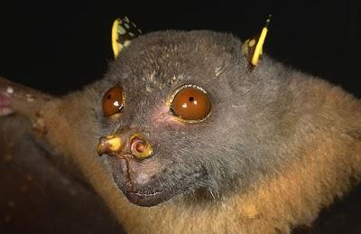 tube-nosed bat