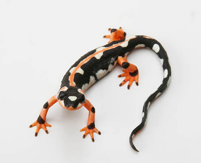 The Last of the Luristan Newts
