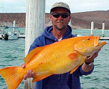 golden grouper
