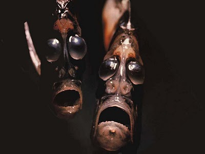 Friends With a Hatchetfish?