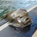 lumpfish1
