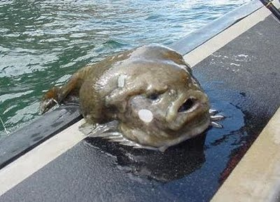 Jabba the Hutt in Fish Form