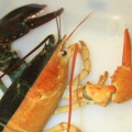 neaq_halloweenlobster_1
