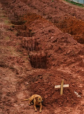 dog next to grave, brazil landslides