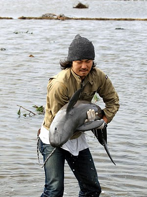 Baby Porpoise Rescued After Tsunami
