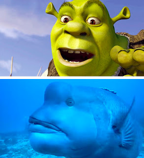 shrek fish