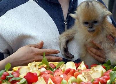 snub-nosed monkey birthday