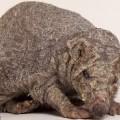 spineless-hedgehog11