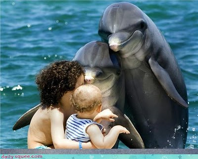 dolphin adoption