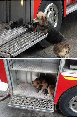 Incredible Photo: Dog Rescues Puppies From Fire