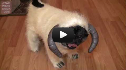 Wampug: Best Pet Costume Ever?